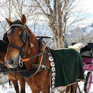 Sonnenterrasse Braunwald Pferde Kutsche